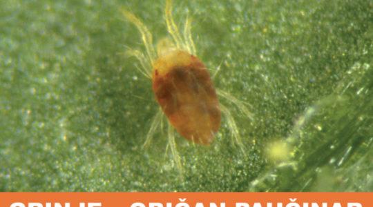 Harmful organisms