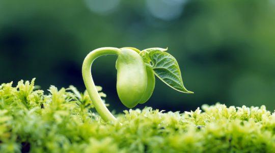 Tretiranje semena